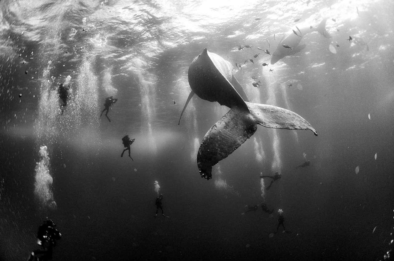 1455879604_tmp_Anuar_Patjane_Floriuk_-_Whale_Whisperers