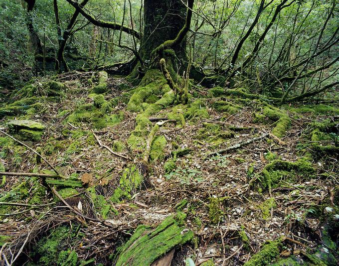 "Jacqueline Hassink, 'Onoaida 6, Unwired Landscapes, 30°17'59""N 130°31'49""E, Onoaida trail, Yakushima, Japan', Fall, 2 October 2016, via Nederlands Fotomuseum, Rotterdam."