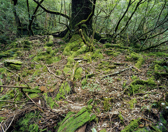 "Jacqueline Hassink, 'Onoaida 6, Unwired Landscapes, 30°17'59""N 130°31'49""E, Onoaida trail, Yakushima, Japan', Fall, 2 October 2016, via Nederlands Fotomuseum, Rotterdam."