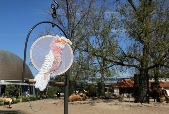 Papegaaitje leef je nog - Tess van Zalinge. Foto ARTIS, Ronald van Weeren