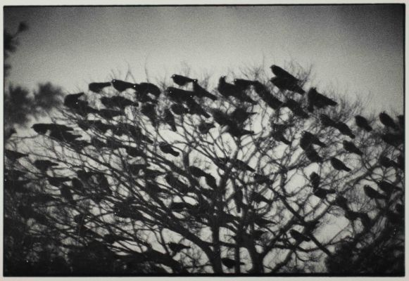 Kanazawa 1977 from the series Ravens C Masahisa Fukase Archives