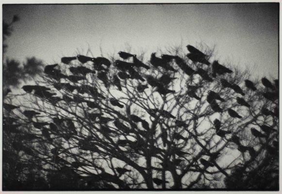 Kanazawa 1977 from the series Ravens C Masahisa Fukase Archives