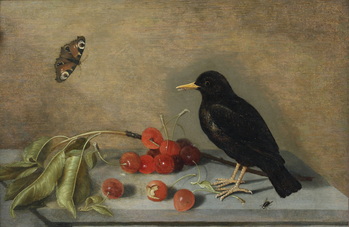 BLACKBIRD, BUTTERFLY AND CHERRIES by ?Ambrosius II Bosschaert or ?Abraham Bosschaert (1573-1621), painting in the Green Closet at Ham House, Richmond-upon-Thames. HH/313